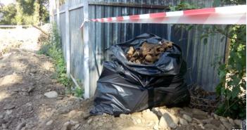 В Ивано-Франковске при прокладке кабеля нашли массовое захоронение 50 человек